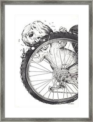 Angry Beaver  Framed Print by Scott Nelson