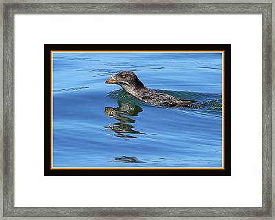 Angry Bird Framed Print by BYETPhotography
