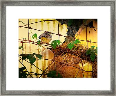 Angry Bird Framed Print by Theresa Campbell