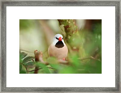 Angry Bird Framed Print