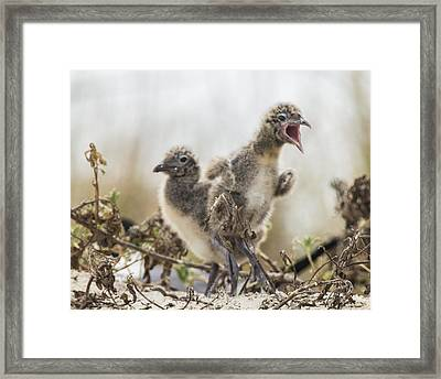 Framed Print featuring the photograph Angry Birds by Paula Porterfield-Izzo