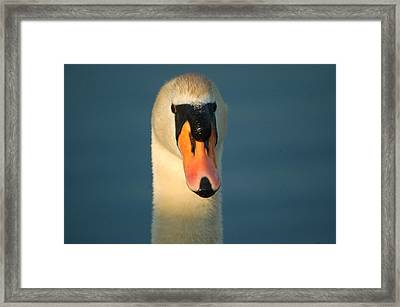 Angry Dad Framed Print