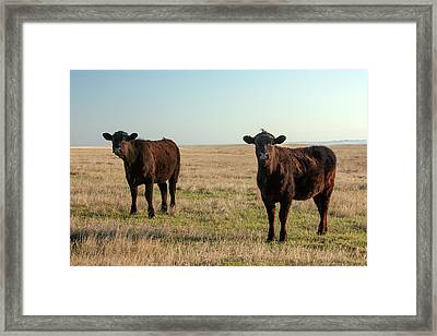 Angus Alerted Framed Print by Todd Klassy