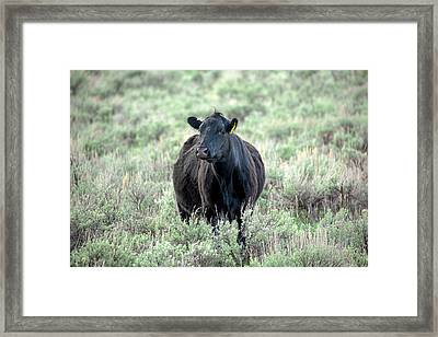 Angus And Sage Framed Print by Todd Klassy