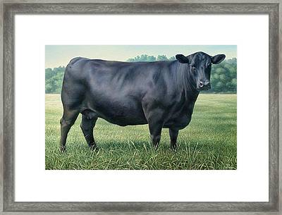 Angus Cow 182m 2 2007 Framed Print