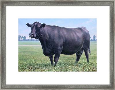 Angus Cow 981 2007 Framed Print