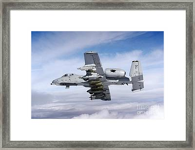 Angy Bird  Framed Print by Celestial Images