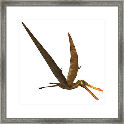 Anhanguera Pterosaur Framed Print by Corey Ford