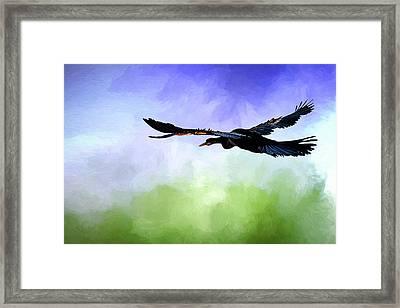 Anhinga In Flight Framed Print