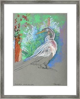 Anhinga Sarasota Plein Air Framed Print