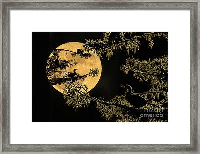 Anhingas In Full Moon Framed Print by Bonnie Barry