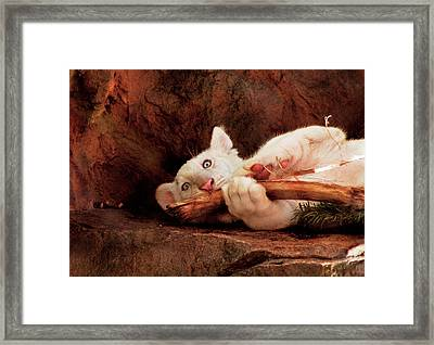 Animal - Cat - My Chew Toy Framed Print by Mike Savad