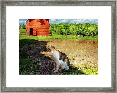 Animal - Cat - The Mouser Framed Print by Mike Savad