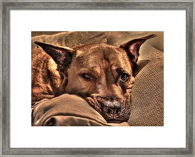 Animal 9 Framed Print