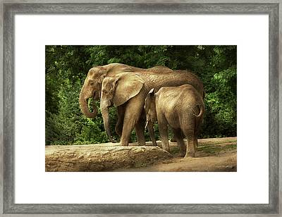 Animal - Elephant - Tight Knit Family Framed Print by Mike Savad