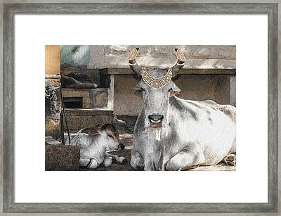 Animal Royalty 12 Framed Print by Sumit Mehndiratta
