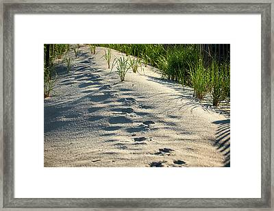 Animal Tracks In Sand Framed Print