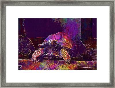 Framed Print featuring the digital art Animal Turtle Zoo  by PixBreak Art