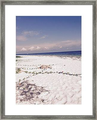 Framed Print featuring the photograph Anna Maria Island Beyond The White Sand by Jean Marie Maggi