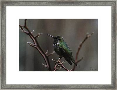 Anna Rainwings Framed Print