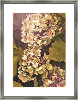 Annabelle Framed Print by JAMART Photography