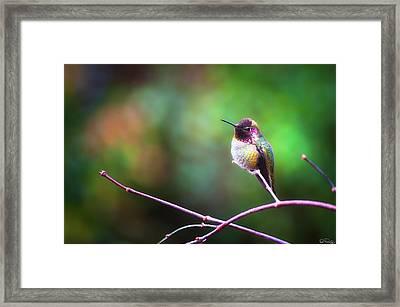 Anna's Hummingbird I Framed Print
