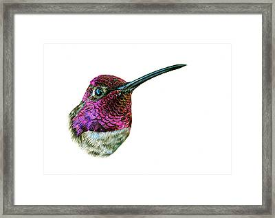 Anna's Hummingbird Framed Print by Logan Parsons