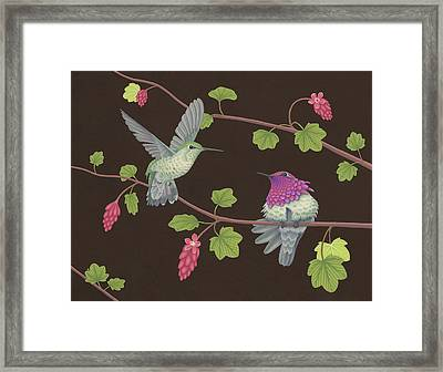 Anna's Hummingbirds Framed Print by Nathan Marcy