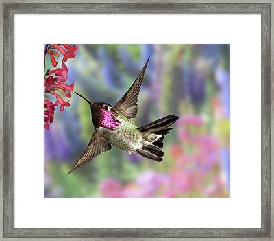 Annas Pastel Background Framed Print