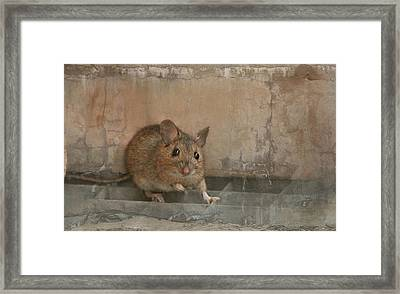 Anneliese Framed Print by Heike Hultsch