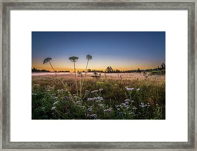 Anne's Lace On Misty Cavendish Meadows Framed Print by Chris Bordeleau