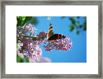 Annie's Butterfly Framed Print
