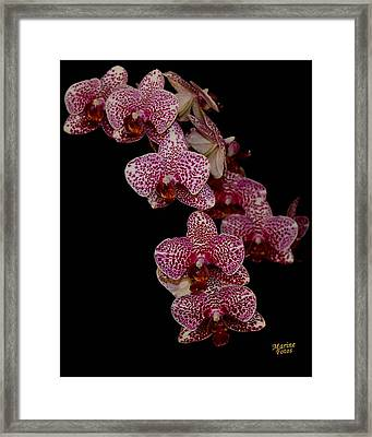 Anniversary Orchid Plant On Black Framed Print