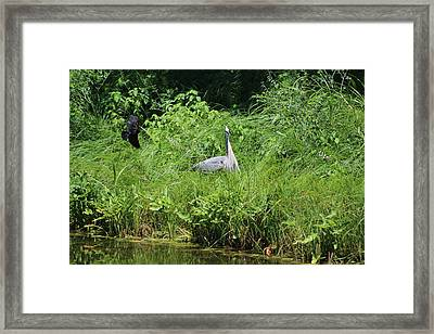 Annoyed - Heron And Red Winged Blackbird 1 Of 10 Framed Print