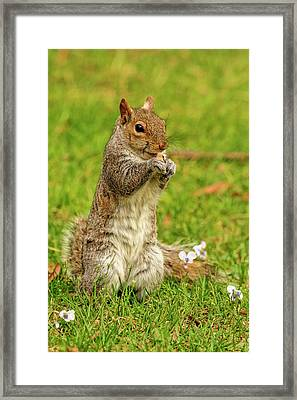 Annoying Pest But Still Cute Framed Print by Geraldine Scull