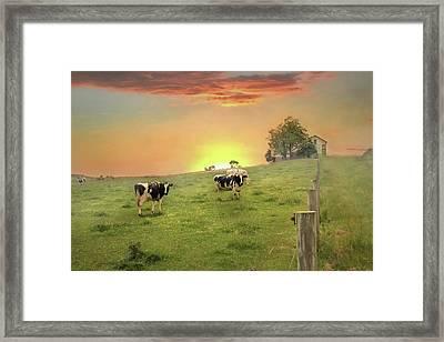 Annville Cows Framed Print by Lori Deiter