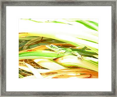 Framed Print featuring the photograph Anole Sunning by Jeanne Kay Juhos