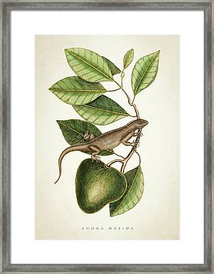 Anona Maxima Botanical  Framed Print