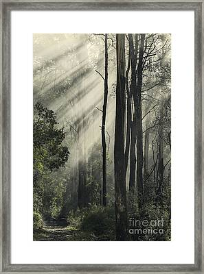 Anothen Framed Print by Andrew Paranavitana