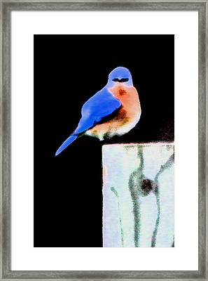 Another Angry Bluebird Framed Print by Alan Skonieczny