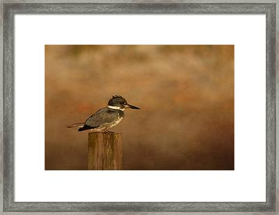 Another Bad Feather Day Framed Print