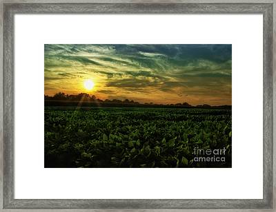 Another Country Sunset Framed Print