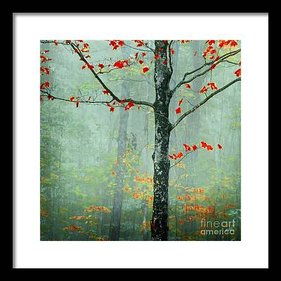 Vermont Fall Foliage Framed Prints