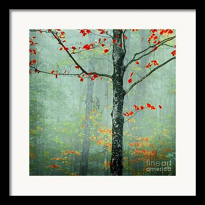 Fall Foliage Photographs Framed Prints