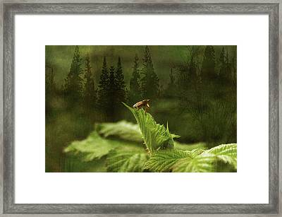Another Day Framed Print by Terrie Taylor
