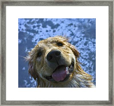 Another Dip In The Lake Framed Print by Susan Yates