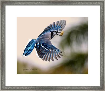 Another Peanut Framed Print by Don Durfee