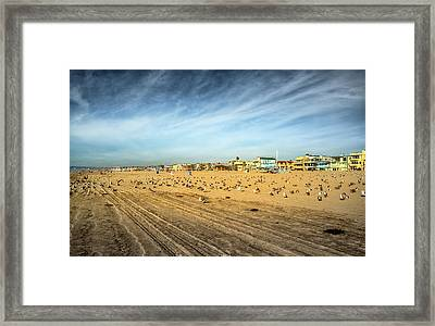 Another Seagull Afternoon Framed Print