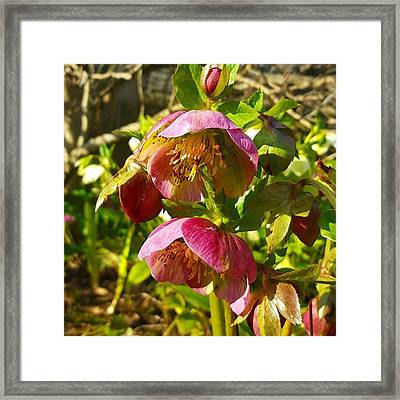 Another Sign That #spring Is On The Framed Print by Dante Harker