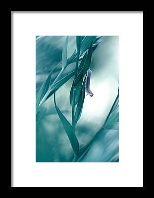 Caterpillar Framed Prints